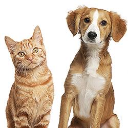 Plano de Saúde Pet | Rede Credenciada | Health For Pet